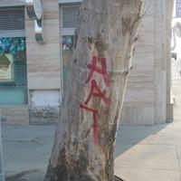 Rákóczi téri fák