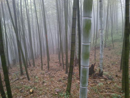 bambuszerdo.JPG
