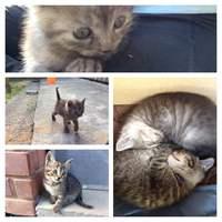 Új macskák Mecseknádasdon