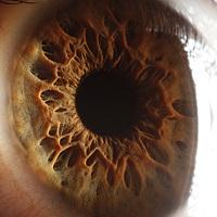 Makrofotók az emberi szemről