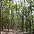 A fák királya – a teakfa