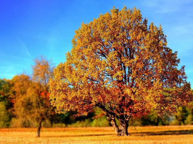 Az őszre hangolt lakás