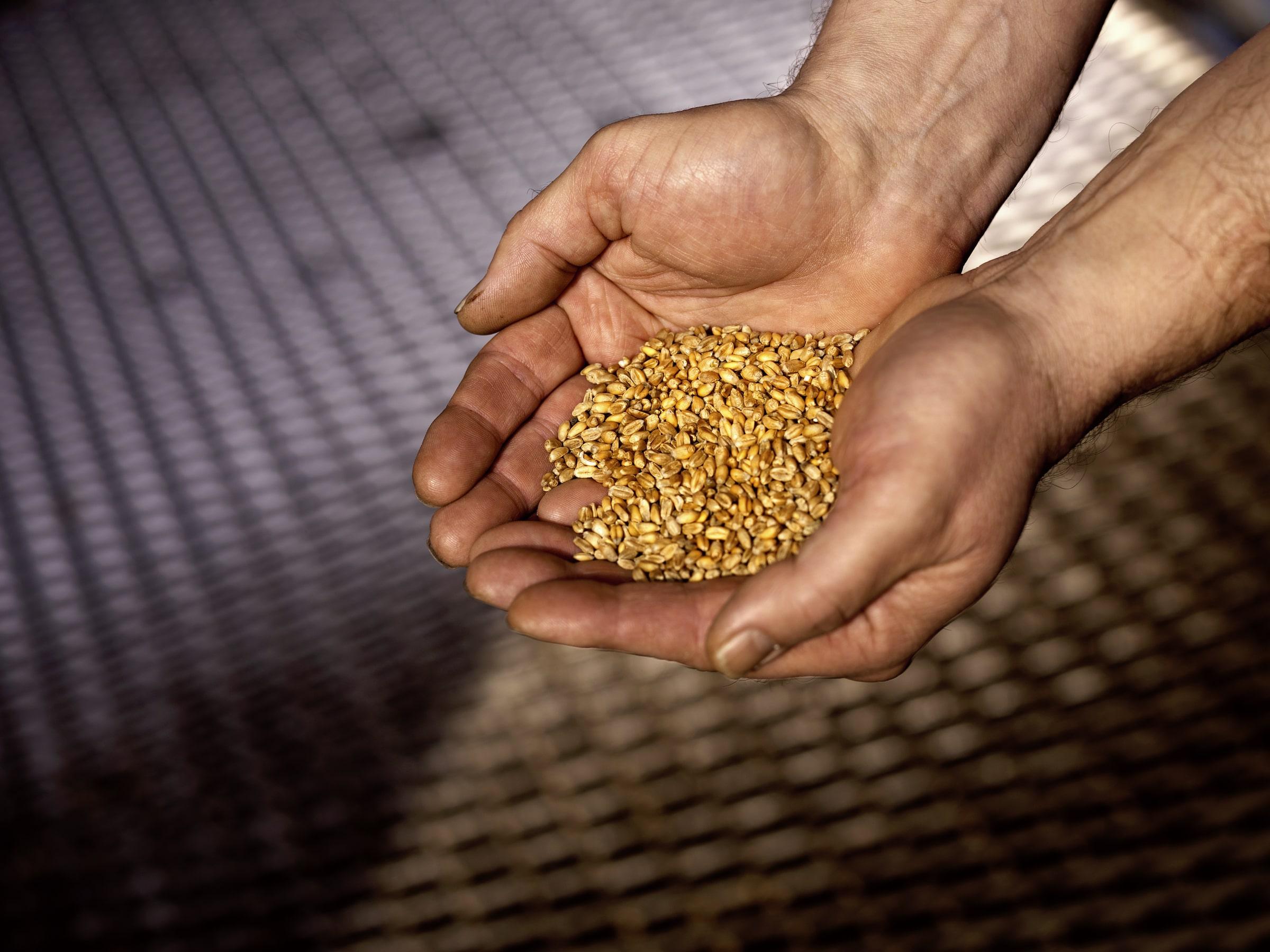 elyx-ahus-distillery-wheat.jpg