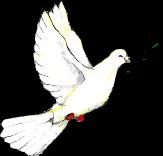 Béke vadgerle :)