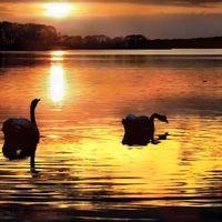 Sík Sándor: Éjszaka a vizeken