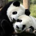 Python - A pandas szépségei (1. rész)