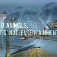 Az állatoknak nem szórakozás a cirkusz