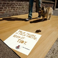 Utcai háború a kutyaszar ellen