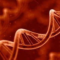 A tudósok rájöttek, miképp okozhatnak gondolataink a génekben molekuláris változásokat