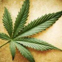Szendi Gábor:  A marihuána és a pszichózis