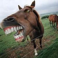 Az állatorvosi ló és az EU elvárásai