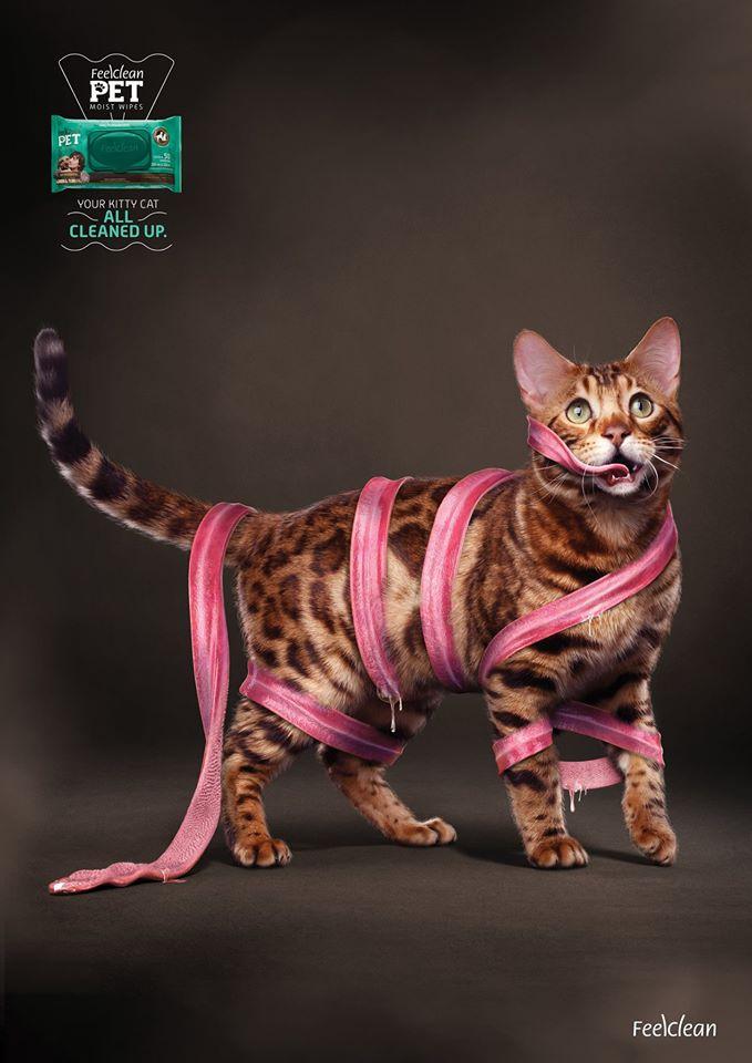 Leghosszabb macskanyelv evör