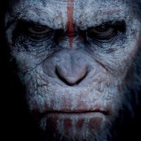 poszter: a majmok bolygója - forradalom [dawn of the planet of the apes] (2014)