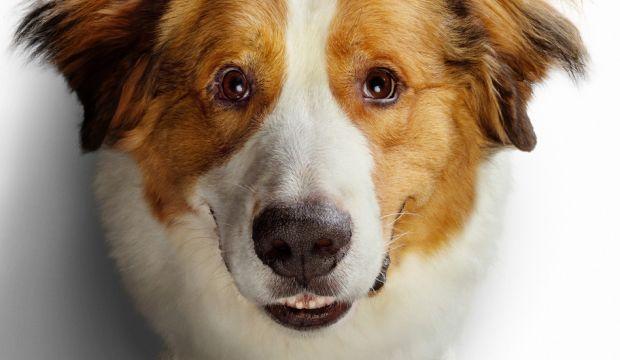 dogs_journey.jpg