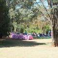Pretoria Botanical Garden