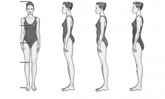 A torzó-láb arány a testalkatunk egyik legfontosabb meghatározója. Mivel a csontozatunk és az izmaink tapadása határozza meg, nem nagyon tudunk rajta sporttal formálni.
