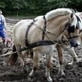 Forgatásos és forgatás nélküli talajművelés (I.)