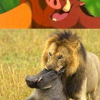 Akkor az oroszlán és a vaddisznó nem szeretik egymást?