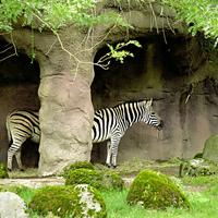 Hosszú zebra