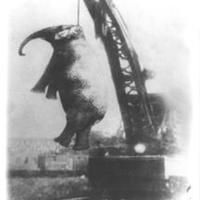Akasszátok föl az elefántot!