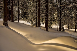 Lágy téli táj