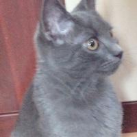 Kiszagolják a macskáka szén-monoxidot