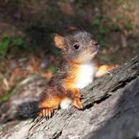 A haldokló mókus és a kém