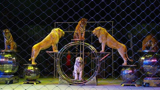 cirkuszi-allatok.jpg