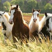 Ne keresd meg a lovakat.