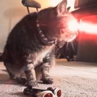 Az új, családbarát X-Men: Küklopsz, a macska!