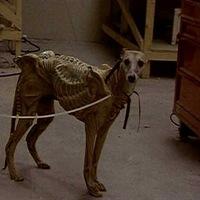 Az Alien-kutya és a biszex szörnyeteg!