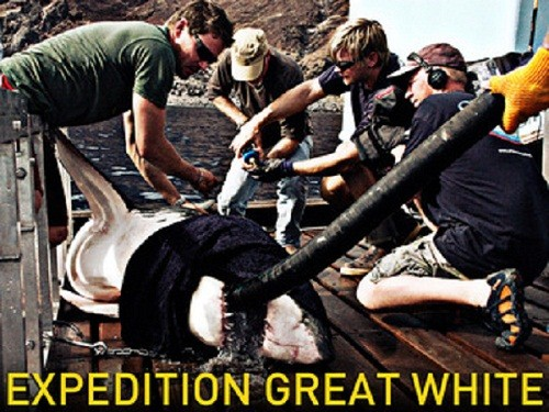 expedition-great-white_1.jpg