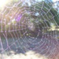 A pók és az Alzheimer-kór