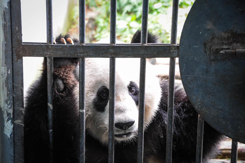 panda-bars.jpg