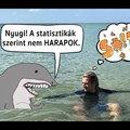 #4 Az 5 legveszélyesebb cápa Ausztráliában