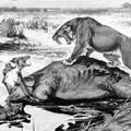 Új felfedezés írhatja át az amerikai ősemlősök kihalásának történetét