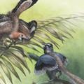 Kihívóra talált volna az Archaeopteryx?