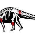 Hosszúnyakú dinoszaurusz maradványaira bukkantak Ecuadorban