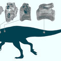 Ragadozó dinoszaurusz fosszíliáira bukkantak az angol szigeten