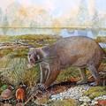 Hatalmasra nőtt meg a vombatok és koalák kihalt rokona
