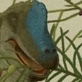 Lovak mentették ki a Brachiosaurus kétméteres felkarcsontját