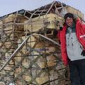 Leguánszerű őshüllő lakta az antarktiszi erdőségeket