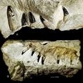Tízméteres tengeri őshüllő maradványaira bukkantak Lengyelországban