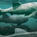 Békés planktonszűrögető volt az óriás páncélos őshal