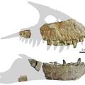 Újabb T. rex-rokon fosszíliái kerültek elő