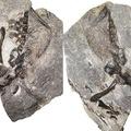 Már 300 millió éve gondoskodhatnak utódaikról a gerincesek