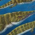Mítoszok réméről nevezték el a ritka tengeri őshüllőt
