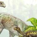 Mire felnőttek, négyről két lábra ágaskodtak a hatalmas dinoszauruszok