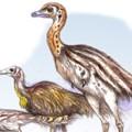 Fény derülhetett a csökött karú dinoszauruszok eredetére