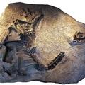 Az Allosaurus új faját írták le